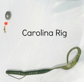Carolina Rigged Worm
