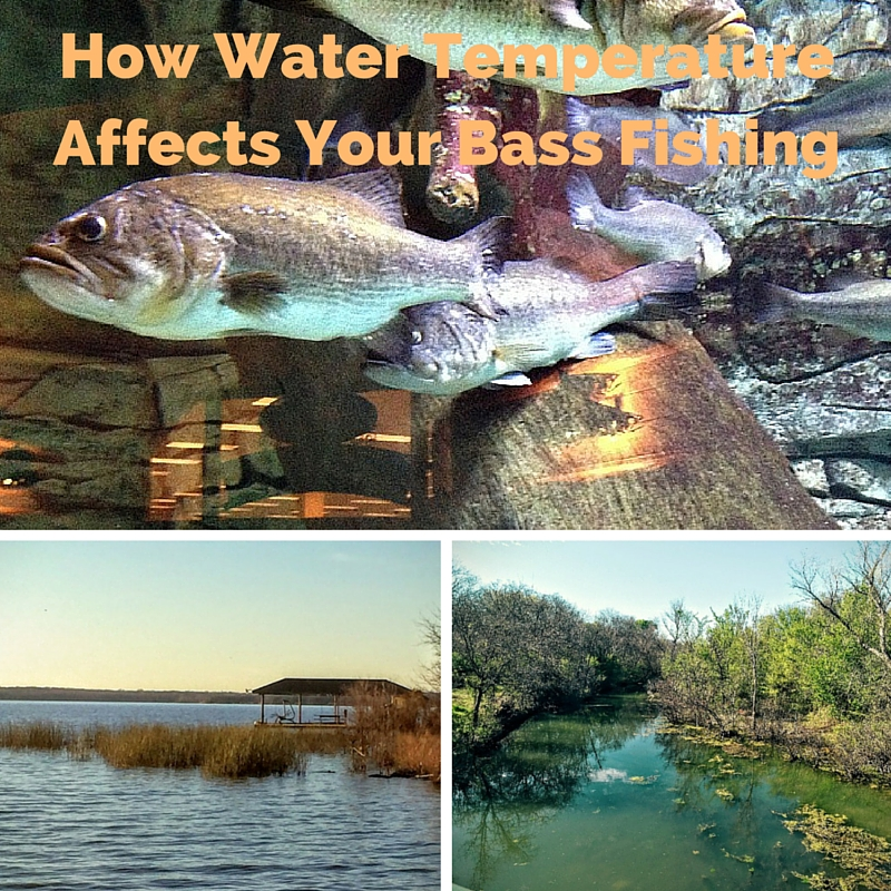 Finding bass based on water temperature