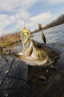 largemouth bass fishing find more catch more with the