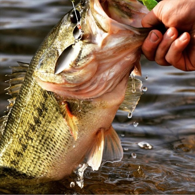 Spring largemouth bass
