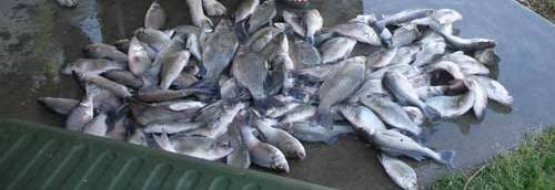 Load of White Bass